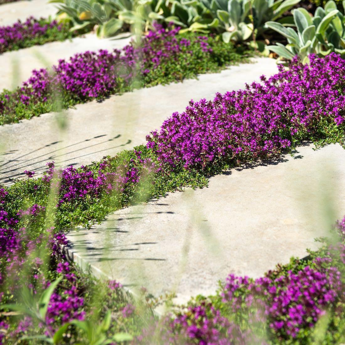 Contemporary Family Garden, 35 Bourn Caxton